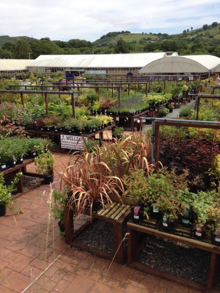 Garden Centre: Caerphilly Garden Centre